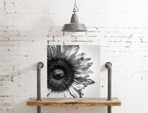 kjdewaal_shadow_of_a_sunflower_5