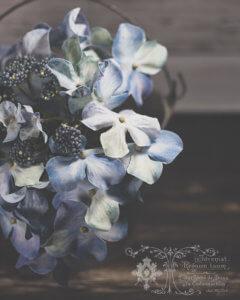 kjdewaal_blue_hydrangea