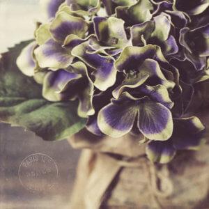 kjdewaal_paris_flowers