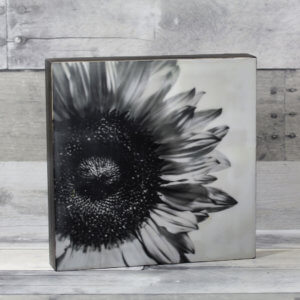 kjdewaal_shadow_of_a_sunflower_encaustic