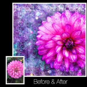 dahlia-before-after-digital-art