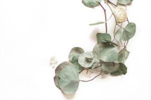 organic vine image